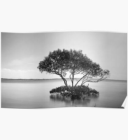 The Mangrove Tree Poster