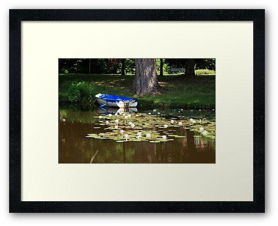 Water Lilies by aidan  moran