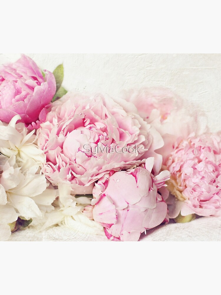 Peonies on white by SylviaCook