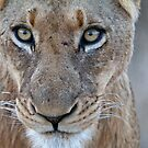 Look Into My Eyes.... You Are Getting Sleepy... by Michael  Moss