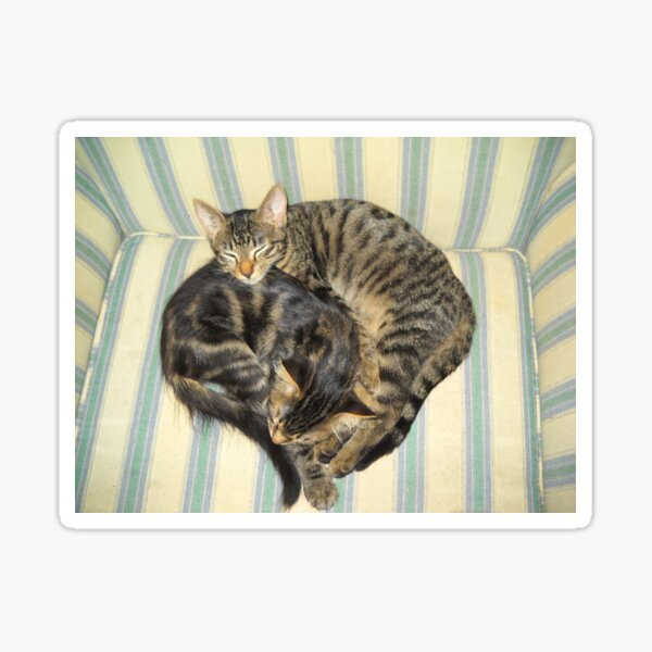 Kitty Love - Sammy and Miri Sticker