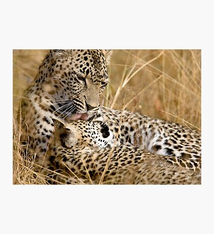 Karula and cub Photographic Print