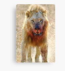Majingilane - Male Lion - Hyena Intimidation Canvas Print