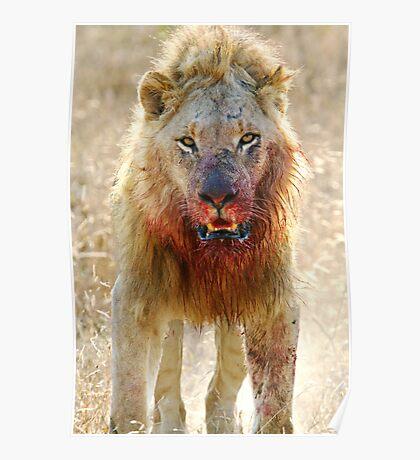 Majingilane - Male Lion - Hyena Intimidation Poster