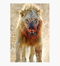 Majingilane - Male Lion - Hyena Intimidation Photographic Print