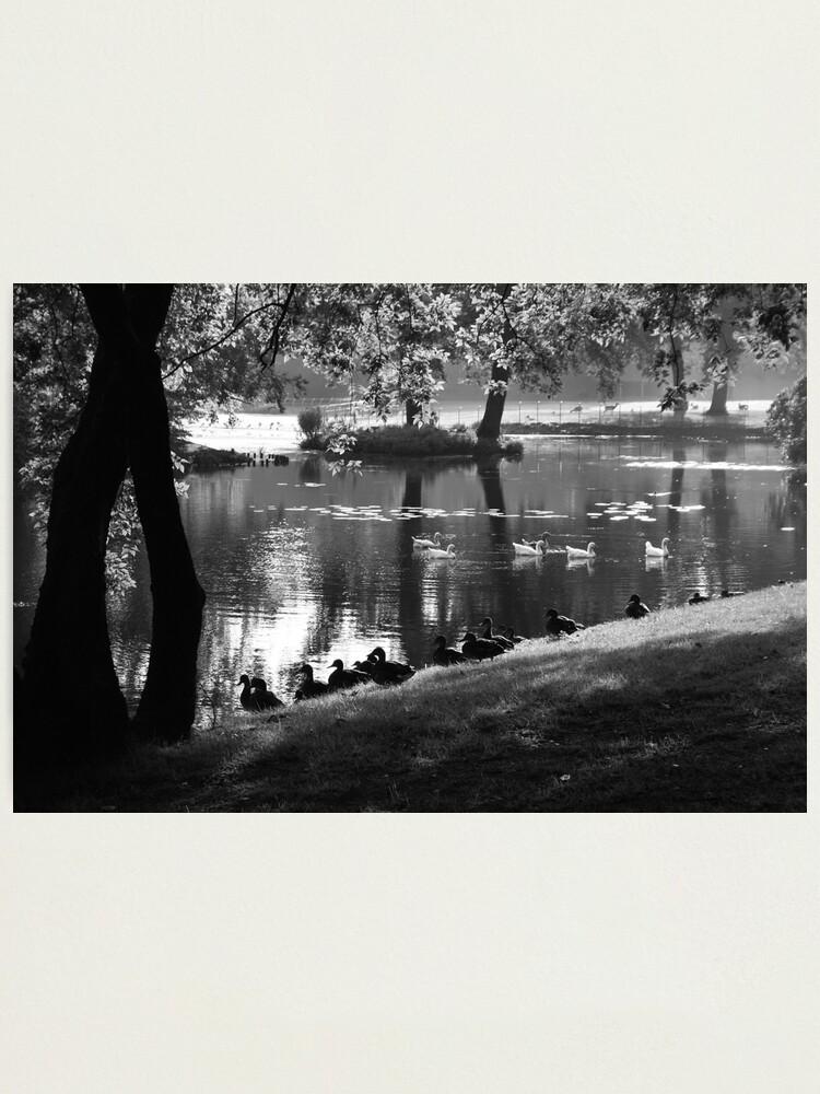 Alternate view of Park Life Photographic Print