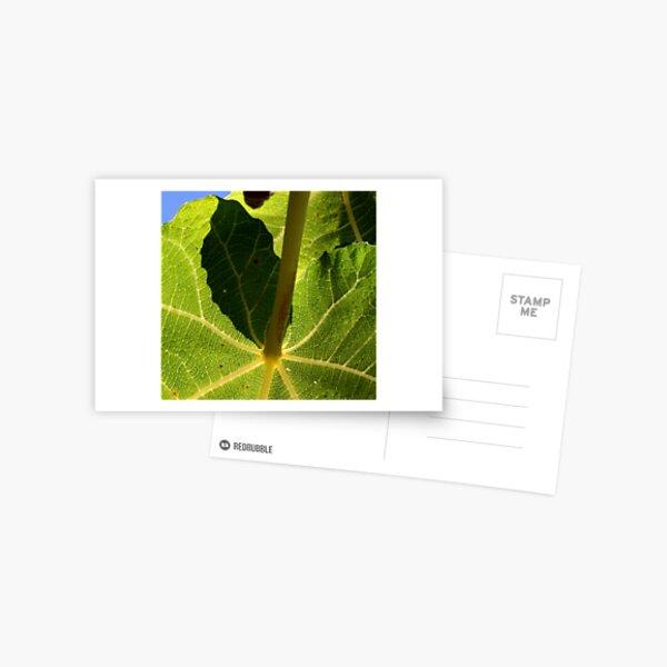 parasol vert Postcard