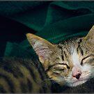 Sleepy. by Sime Jadresin