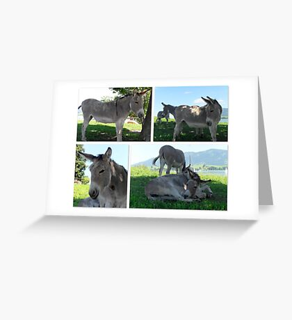 It's a Donkey's Life! Greeting Card