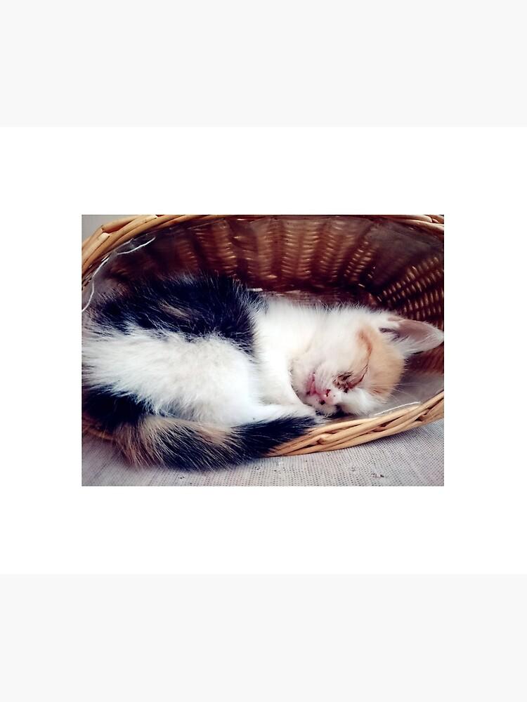 Süßer Katzen-Traum von Gourmetkater