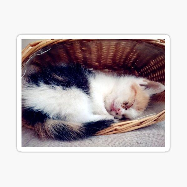 Süßer Katzen-Traum Sticker