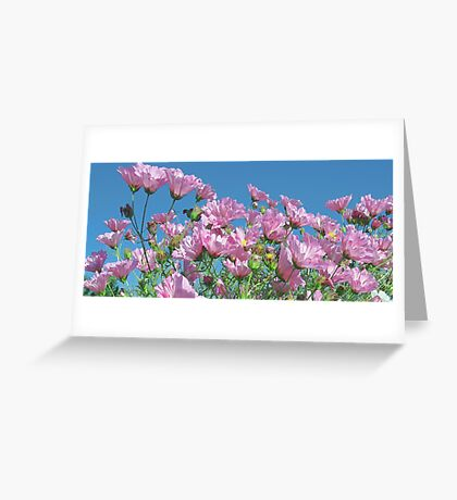 Pink Cosmos - Blue Sky Greeting Card