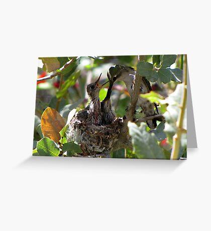 Costa's Hummingbird ~ Growing Still..... Greeting Card