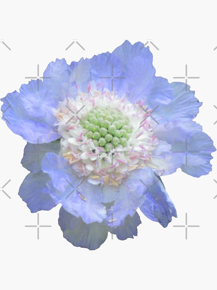 wundervolle blaue Blume, Blüte, Garten, Natur, natürlich von rhnaturestyles
