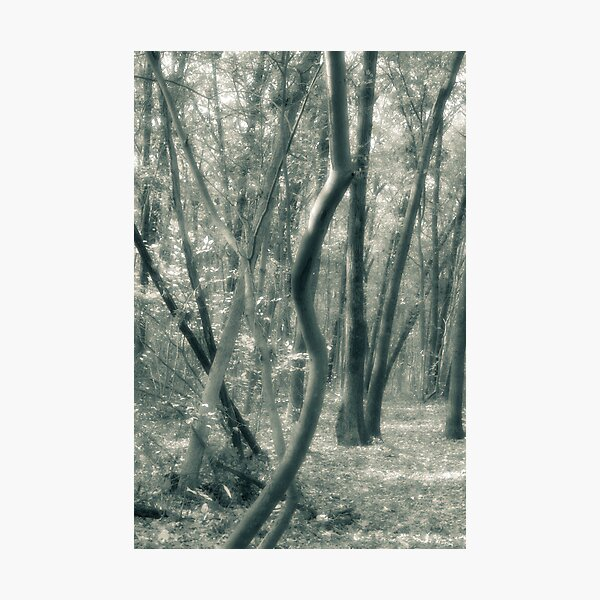 Tree Shapes Louis Campbell Nature Preserve Photographic Print