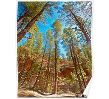 Tall trees of Arizona Poster