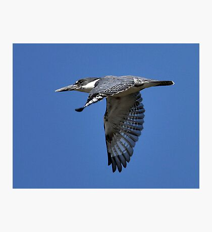 Li'l Blue Photographic Print