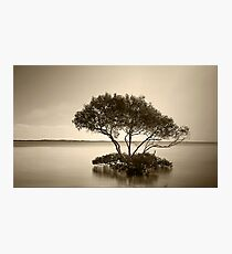 Mangrove Tree in Sepia Photographic Print