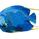 French Angelfish by christinahewson