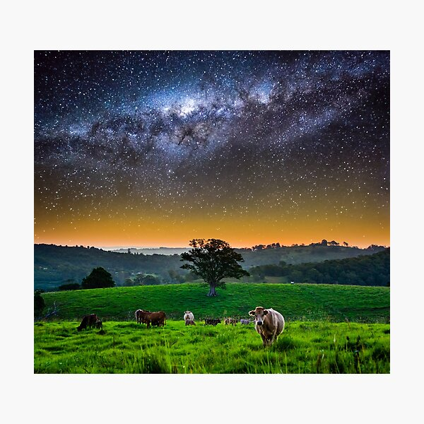 Life in Northern NSW Photographic Print