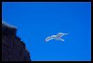 Jonathan Livingston Seagull by Tim Topping