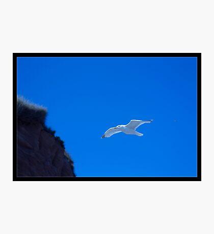 Jonathan Livingston Seagull Photographic Print