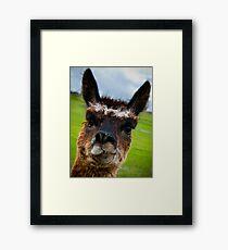 Wacky Alpaca Framed Print