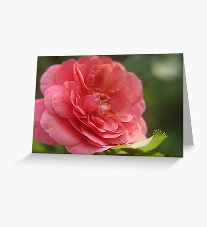"""Pink"" Greeting Card"