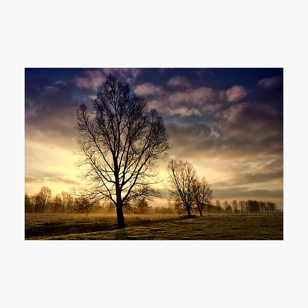 Willows at Sunrise Photographic Print