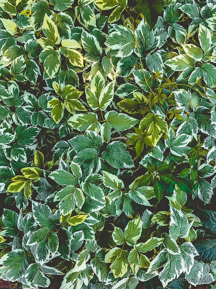 Leafage Green Foliage Nature Photo Pattern by patternsoup