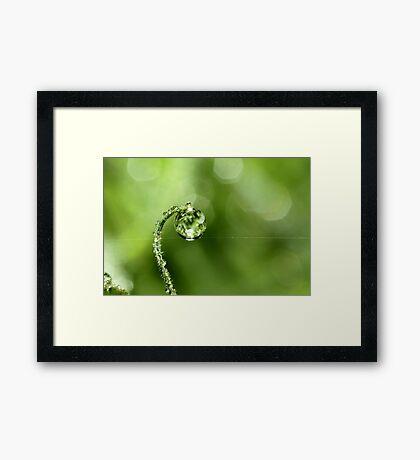 Early Morning Dew Framed Print