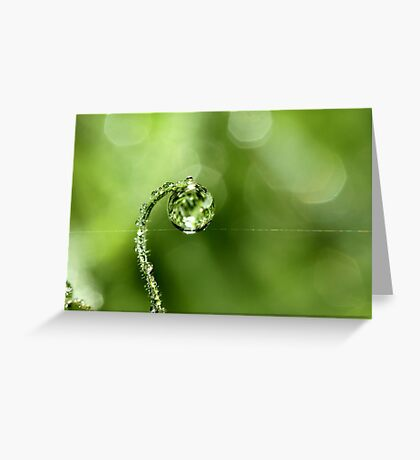 Early Morning Dew Greeting Card