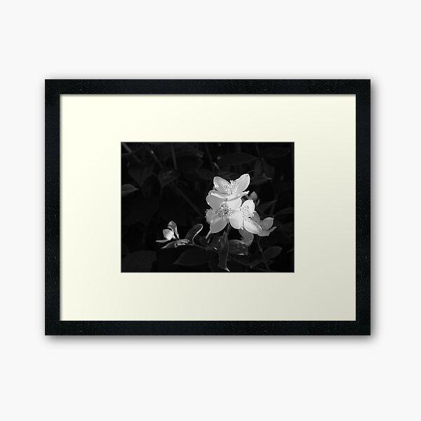 Light from the shade Framed Art Print
