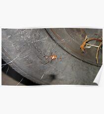 Brown Widow Spider Poster