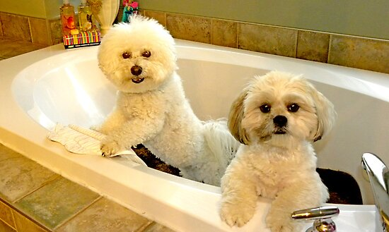 Baths with NO Water are Fun ! by Judy Grant
