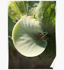 Center of a Staghorn Fern Poster