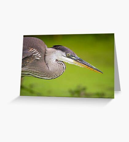 Blue Heron Portrait Greeting Card