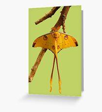 Comet Moth Greeting Card