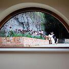 Framed in a window by BlaizerB