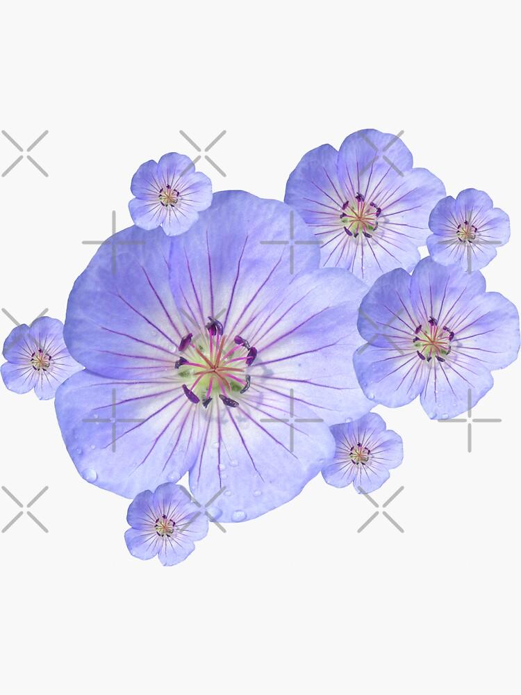 zauberhafte blaue Blumen, Blüten, Garten, Natur, natürlich von rhnaturestyles