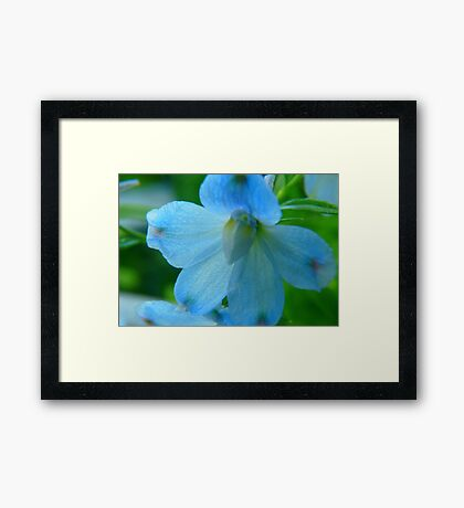 Pretty In Blue Framed Print