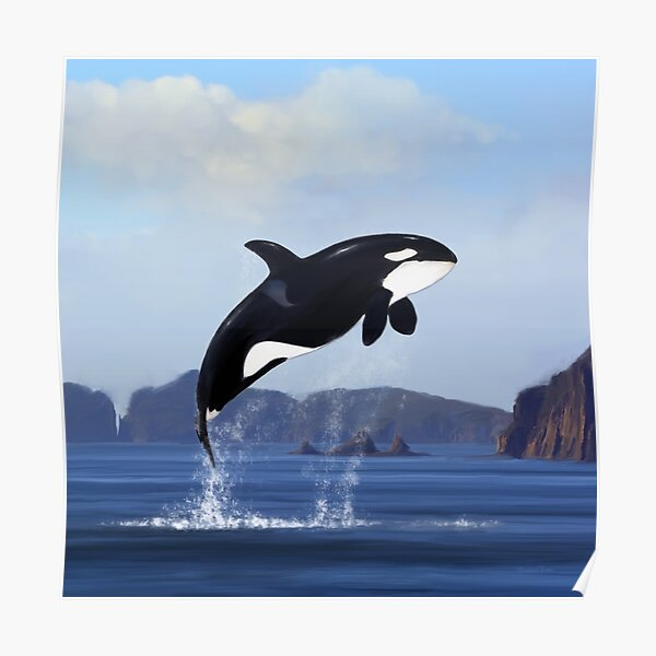 Orca Breaching Poster