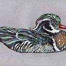 Wood Duck by Vincent von Frese