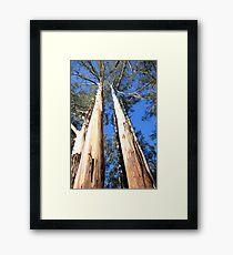 Mountain Ash - Sherbrook Forest  Framed Print