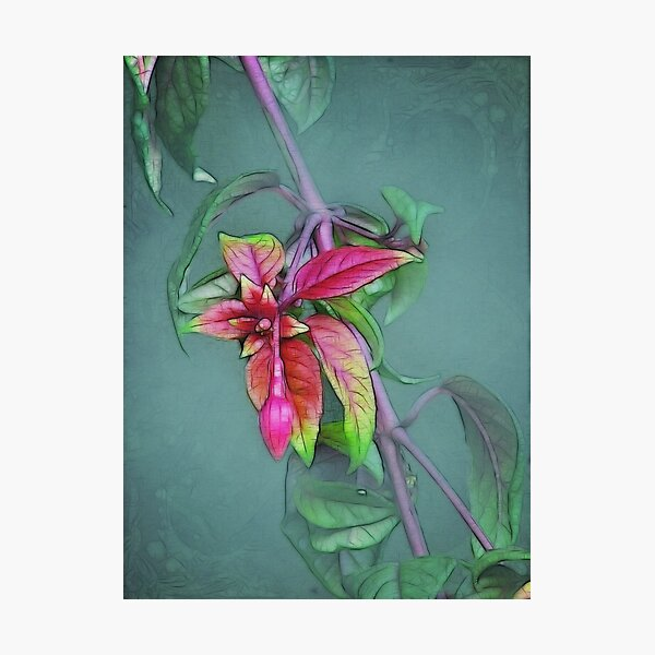 ~ Fuchsia ~ Photographic Print