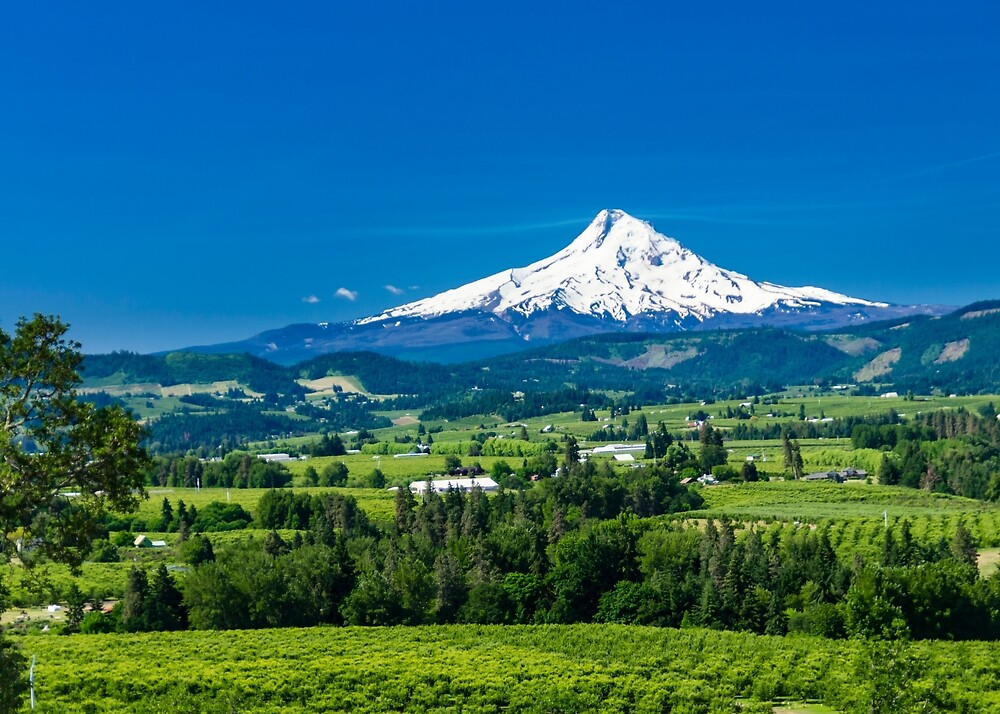 Mount Hood with orchards by Zigzagmtart