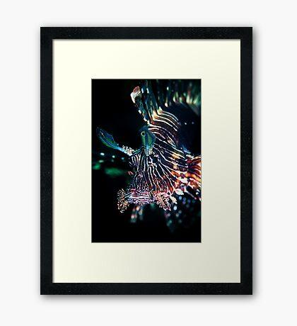 Black lion fish - Lembeh Straits Framed Print