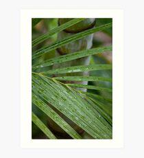 Palm Foilage Art Print