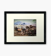 Natural History Framed Print