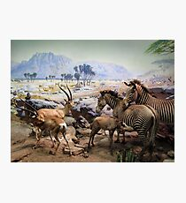 Natural History Photographic Print